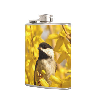 Chickadeefågeln i gul Forsythia blommar flaskan Fickplunta