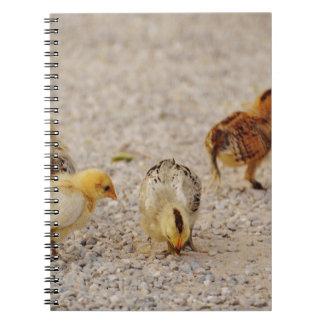 Chickar #2 anteckningsbok