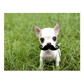 Chihuahua med rolig mustasch i trädgård vykort