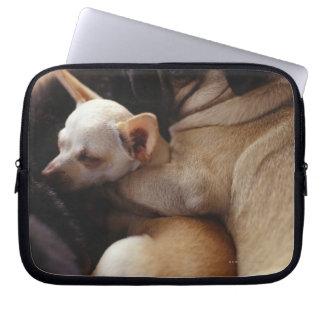 Chihuahua och mops som sovar, närbild laptop sleeve