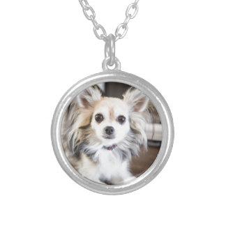 Chihuahua Silverpläterat Halsband