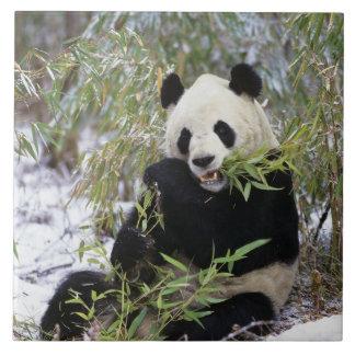China Sichuan landskap. Den jätte- pandaen matar p Kakelplatta