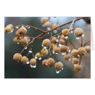 Chinaberryträd i regna hälsningskort