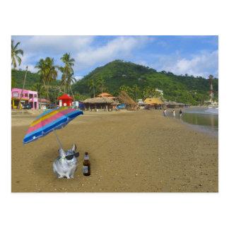 Chinchilla på stranden vykort