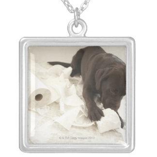 Choklad - bruna labrador. silverpläterat halsband