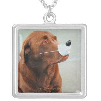 Choklad Labrador som ha på sig en fejkanäsa Silverpläterat Halsband
