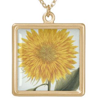 Chrysanthemum Indicum från 'Pythanthoza Iconograph Guldpläterat Halsband