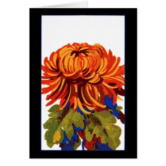Chrysanthemum OBS Kort