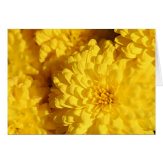 Chrysanthemums i nedgång OBS kort