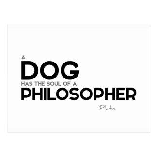 CITATIONSTECKEN: Plato: Hund filosof Vykort