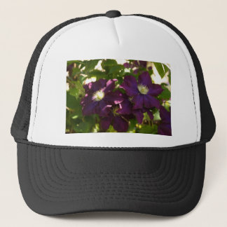 clematis keps