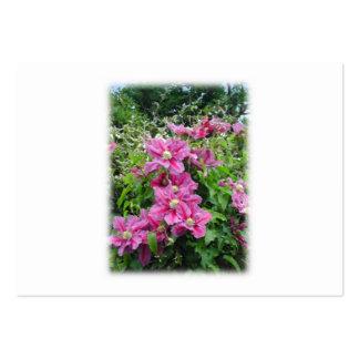 Clematis. Nätt rosor - purpurfärgade Flowers. Set Av Breda Visitkort