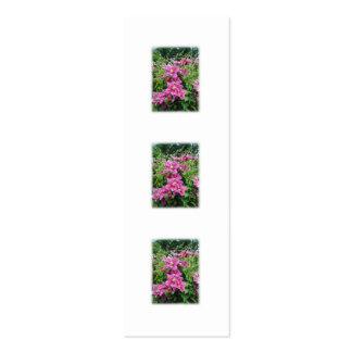 Clematis. Nätt rosor - purpurfärgade Flowers. Visitkort Mallar