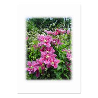 Clematis. Nätt rosor - purpurfärgade Flowers. Visitkort Mall