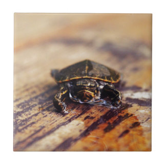 Closeup av en baby målad sköldpadda liten kakelplatta