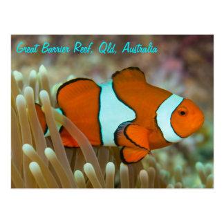 Clownfish på den underbara barriärrevvykortet vykort