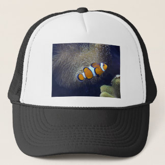 clownfisk, 2 truckerkeps