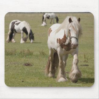 Clydesdale hästar i ett fält, Northumberland, Mus Matta