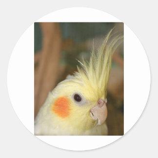 Cockatiel Cutie Runt Klistermärke