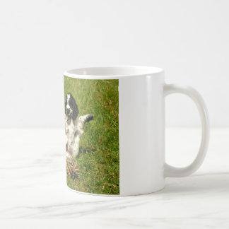 CockerspanielSpanielroligt Kaffemugg