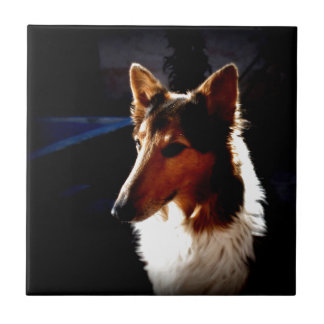 colielugnhund kakelplatta