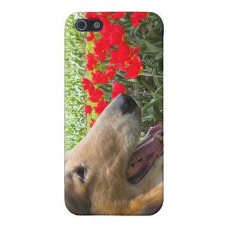 Collie N fodral för tulpaniPhone 4 iPhone 5 Skydd