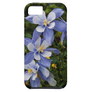 Colorado blått Columbine nära Telluride Colorado Tough iPhone 5 Fodral