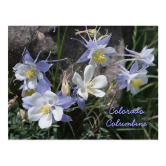 Colorado Columbine Vykort