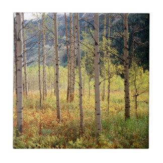Colorado höstfärger av asp- träd kakelplatta