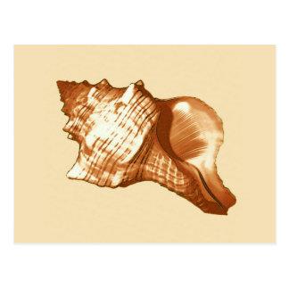 Conchsnäckan skissar - brunt, vit och solbränna vykort