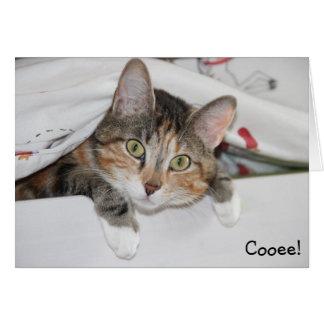Cooee: Roligt födelsedagkort med katten Hälsningskort