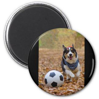 Corgi som leker fotboll magnet