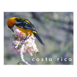 Costa Rica Birding vykort