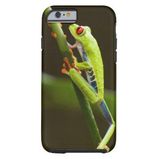 Costa Rica Monteverde, Röd-Synad trädgroda Tough iPhone 6 Case