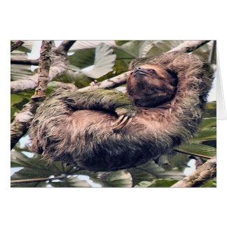 Costarikansk sloth hälsningskort