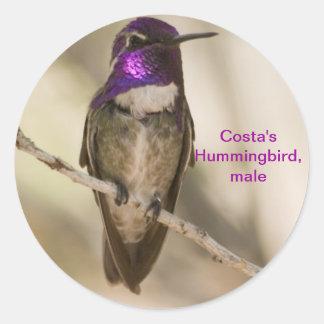 Costas Hummingbird Runt Klistermärke