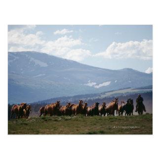 Cowboyflyttaflock av hästar vykort