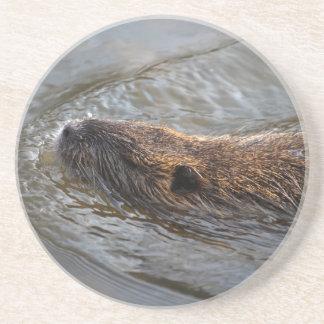 Coypu (Myocastorcoypus) Underlägg Sandsten
