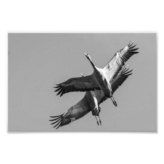 Cranes Fototryck