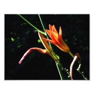 Crayola Daylilies Fototryck