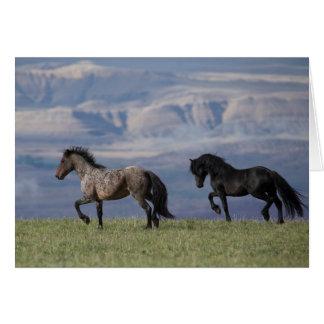 Custer och galax - kort för vildhästhälsning