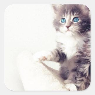 Cutie kattungar fyrkantigt klistermärke
