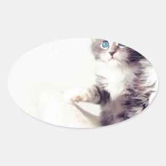 Cutie kattungar ovalt klistermärke