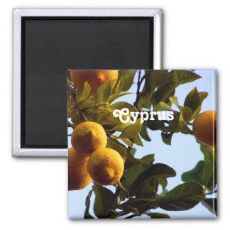 Cypern Lemon Grove Magnet