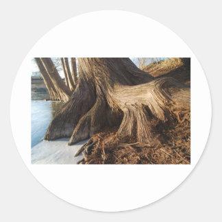 Cypress rotar runt klistermärke
