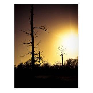 Cypress solnedgång vykort