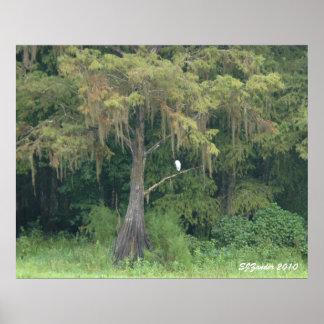 Cypress springatryck poster