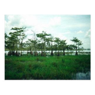 Cypress vaktposter vykort