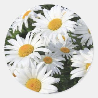 Daisyblommor som växer vit runt klistermärke