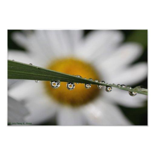 Daisyn Drops fotograferar trycket Fotografi